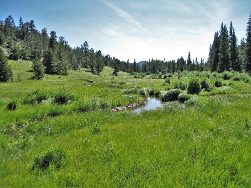 Rocky Mountain National Park Stream. A small stream flowing through Rocky Mountain National Park near Estes Park, Colorado royalty free stock photos