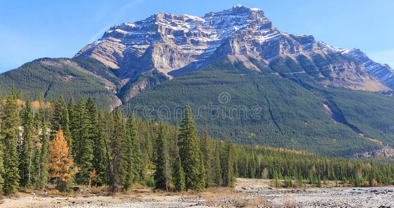 Rocky Mountain peak with trees in foreground. A Rocky Mountain peak with trees in foreground royalty free stock photos