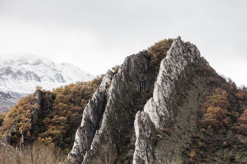 Rocky Mountain Snow foto de stock royalty free