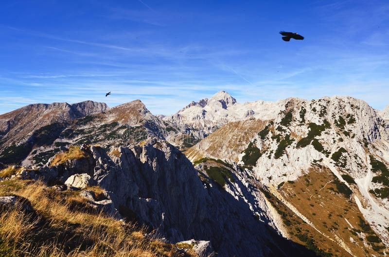Rocky mountains with eagles flying above stock photography