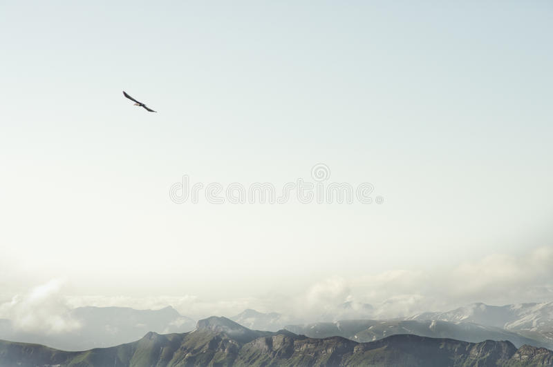 Rocky Mountains and flying eagle bird Landscape. Minimalistic style scenic aerial view royalty free stock photos