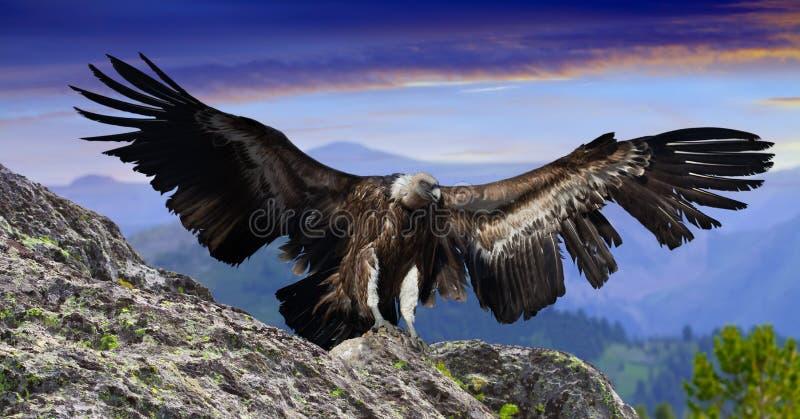 Download Rocky mountains gyps stock photo. Image of flight, bird - 90467580