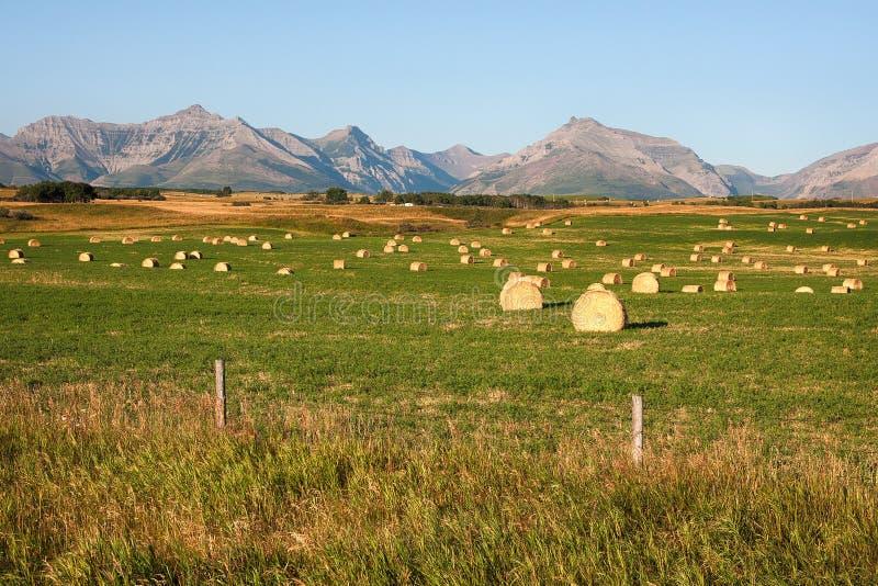 Rocky Mountains Hay Bales in Alberta lizenzfreie stockfotografie