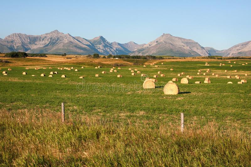 Rocky Mountains Hay Bales em Alberta fotografia de stock royalty free
