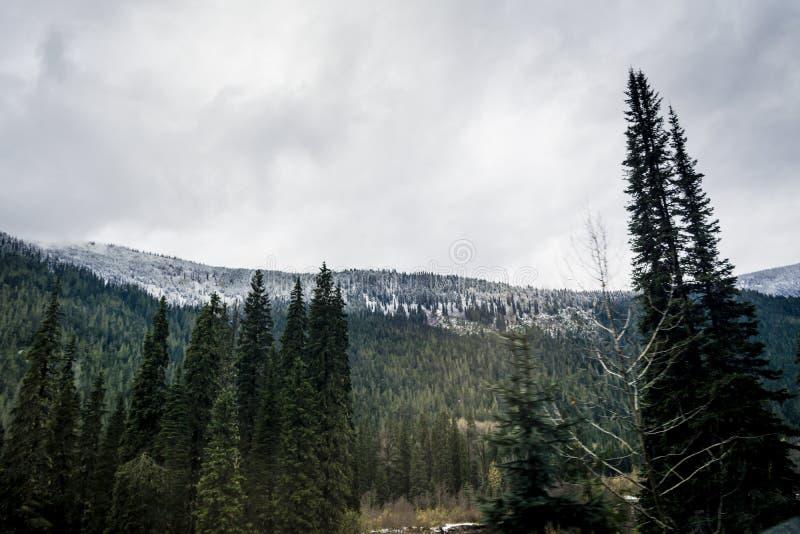Rocky Mountains i Kanada täckte i tidig snö royaltyfri bild