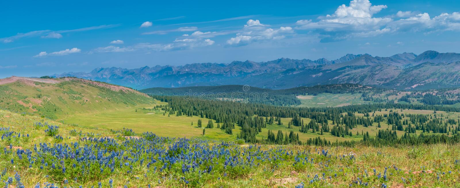 Rocky Mountains Summer Wildflowers stockfotografie