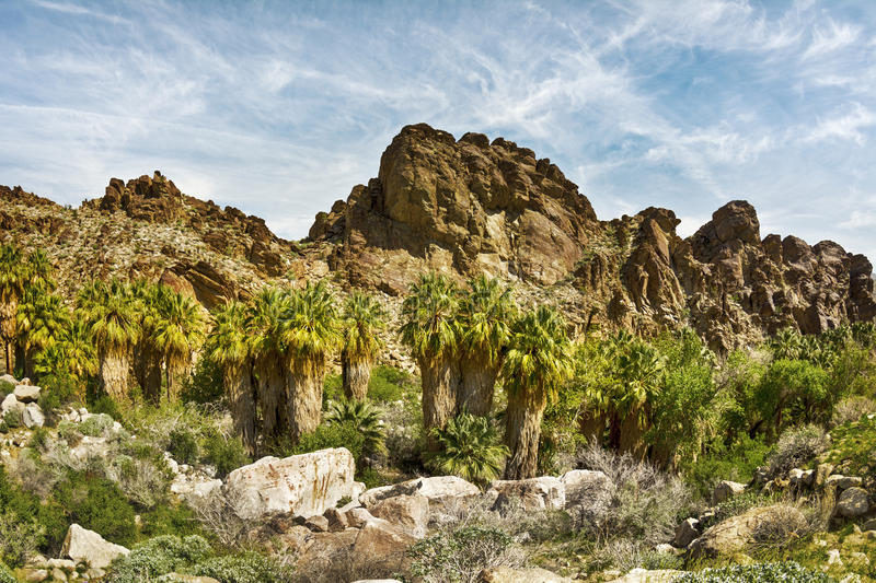 Rocky mountainside lined with palm trees. Cenic view of a rocky mountainside in Palm Springs framed with a row of palm trees and other natural foliage. Mo stock images