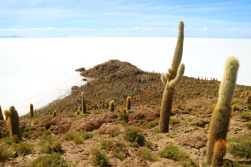 Isla Incahuasi or Isla del Pescado, full of Trichocereus Cactus Located in the Middle of Uyuni Salt Flats, Bolivia. The Rocky Outcrop Isla Incahuasi or Isla del royalty free stock images