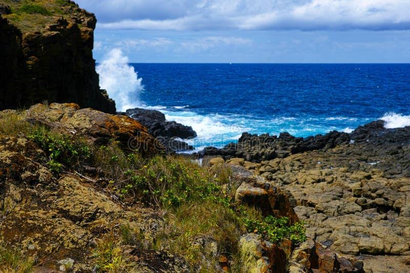 Rocky Pacific Ocean-Küste mit Blumen bei Kiama Australien lizenzfreies stockfoto