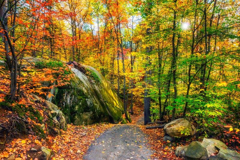 Rocky Path in Autumn Forest fotografia stock