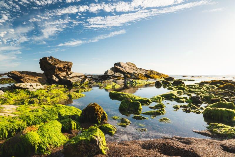 Rocky Riffs på solnedgången, det Eldwayen havet parkerar, den Pismo stranden, Kalifornien Bränninggräs, bakgrund för molnig himme arkivbild