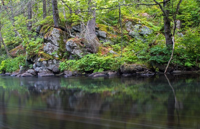Rocky Riverbank Shrouded In Dense Forest royalty free stock images