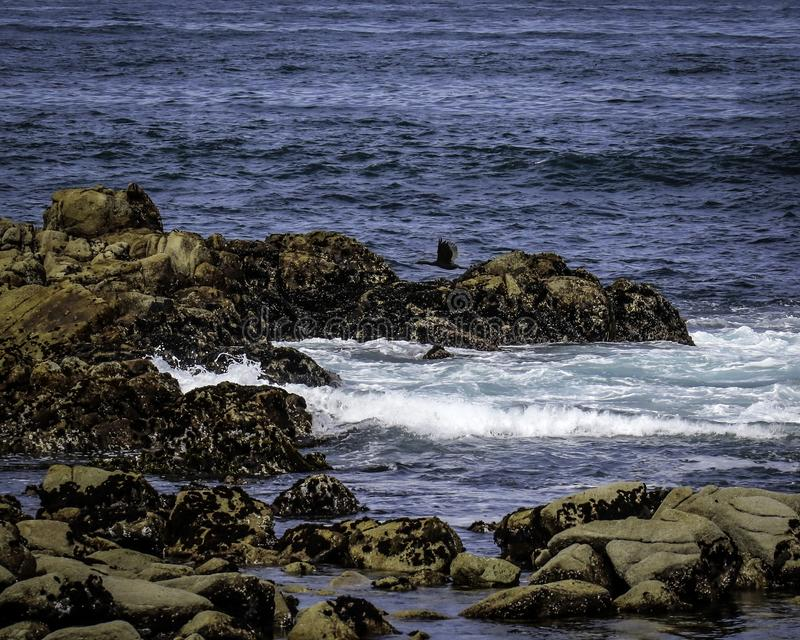 Rocky Seashore With Surf. Pacific Ocean textured rocks and blue water surf splash royalty free stock photos