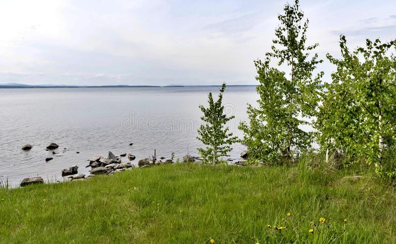 Green grass-covered beach with young birches in the foreground. Rocky shore of the lake, in the distance you can see the Ural mountains, the southern Urals, lake stock image