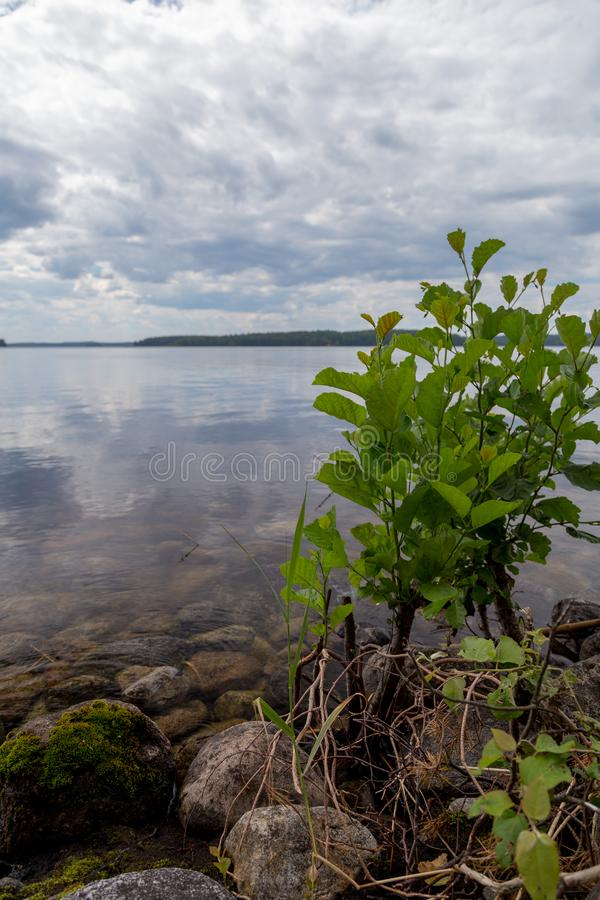 Rocky shore of a lake in Finland on a sunny day stock photography