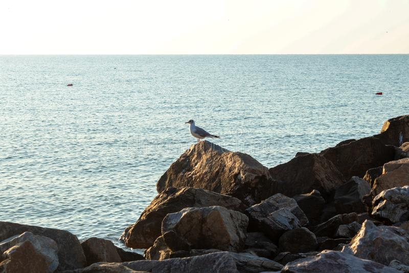 A rocky shore of a ocean and a single gull sitting on a big stone stock image