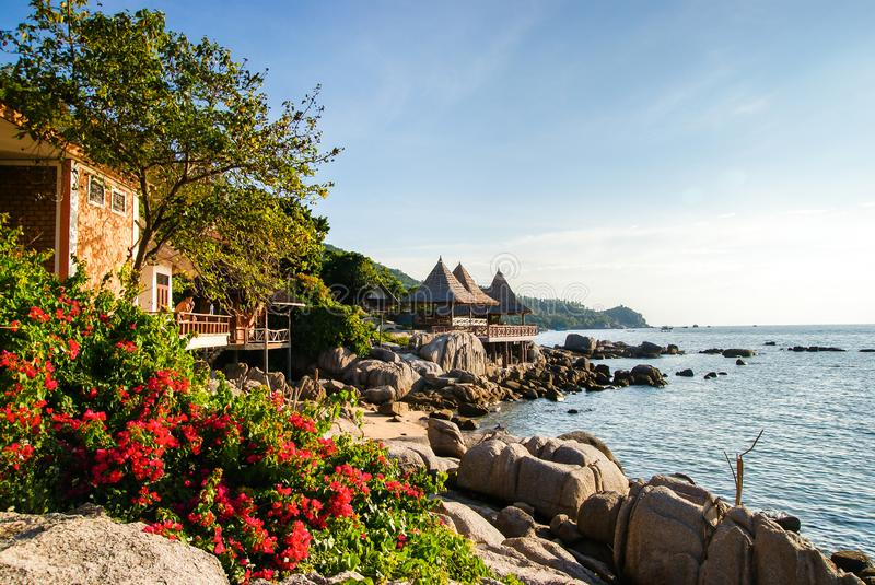 Rocky shore of Sairee beach Koh Tao. Thailand. Large and small boulders are scattered along the shore. Bush with flowers in the. Foreground stock image
