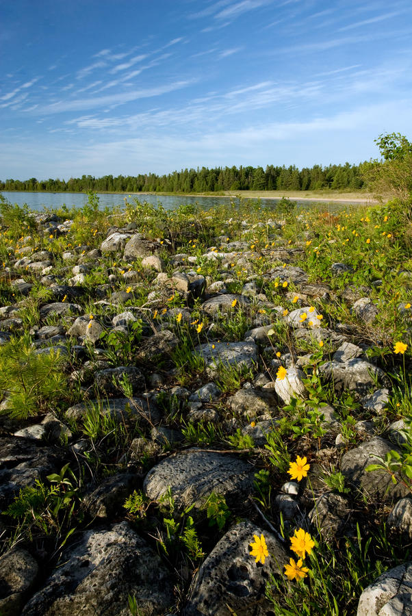 Download Rocky Shoreline And Correopsis Stock Image - Image: 27555389
