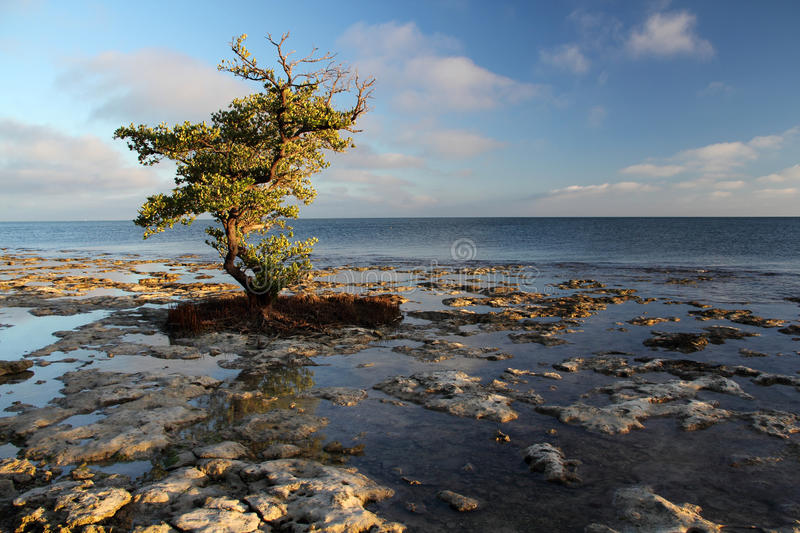 Rocky Shoreline. Rocky outcroppings along the Bahia Honda shoreline in the Florida Keys stock images