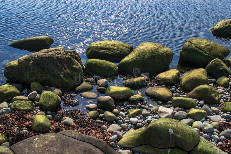 A rocky shoreline by the sea. Green algae on the stones, ripples on the water surface on a sunny day royalty free stock images