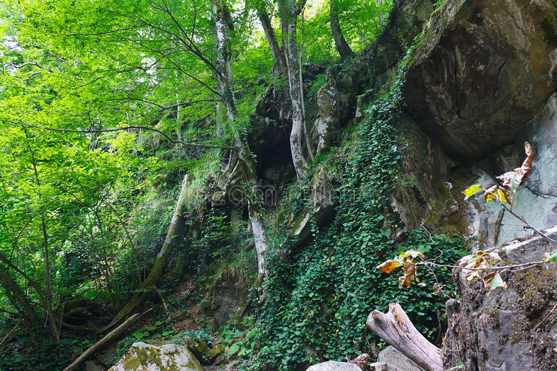 Rocky slope with trees and ivy in mountainous southern forest royalty free stock image