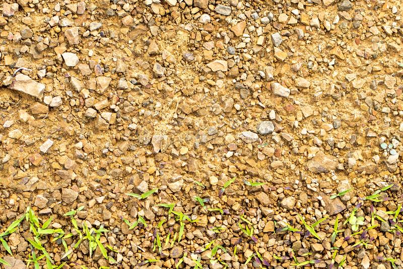 Texture of rocky soil with young grass stock images