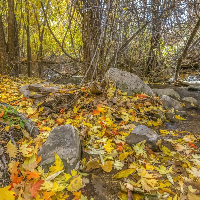 Rocky stream and autumn leaves in Salt Lake City royalty free stock image