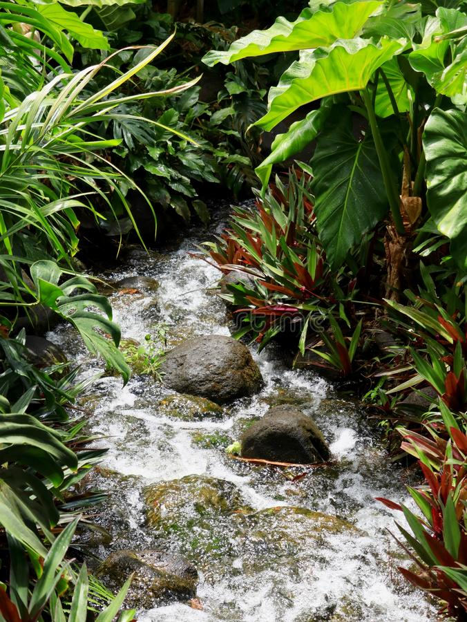 Rocky Stream Disappearing Into Jungle. A rocky stream disappears into mysterious thick, dark and lush tropical rainforest jungle stock photos