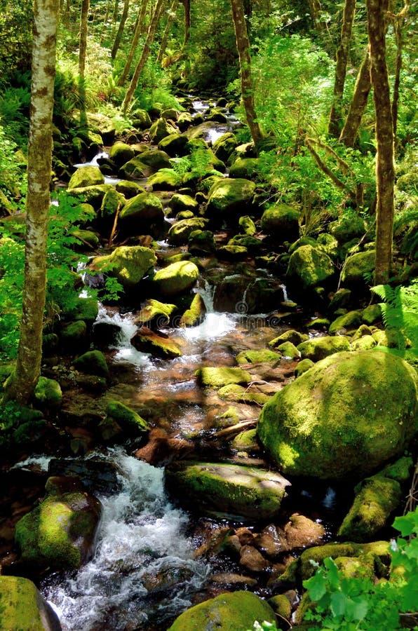 """Rocky Stream Of Elk Creek floresta nacional Siskiyou no € de Rogue Riverâ de """", Oregon imagens de stock"""
