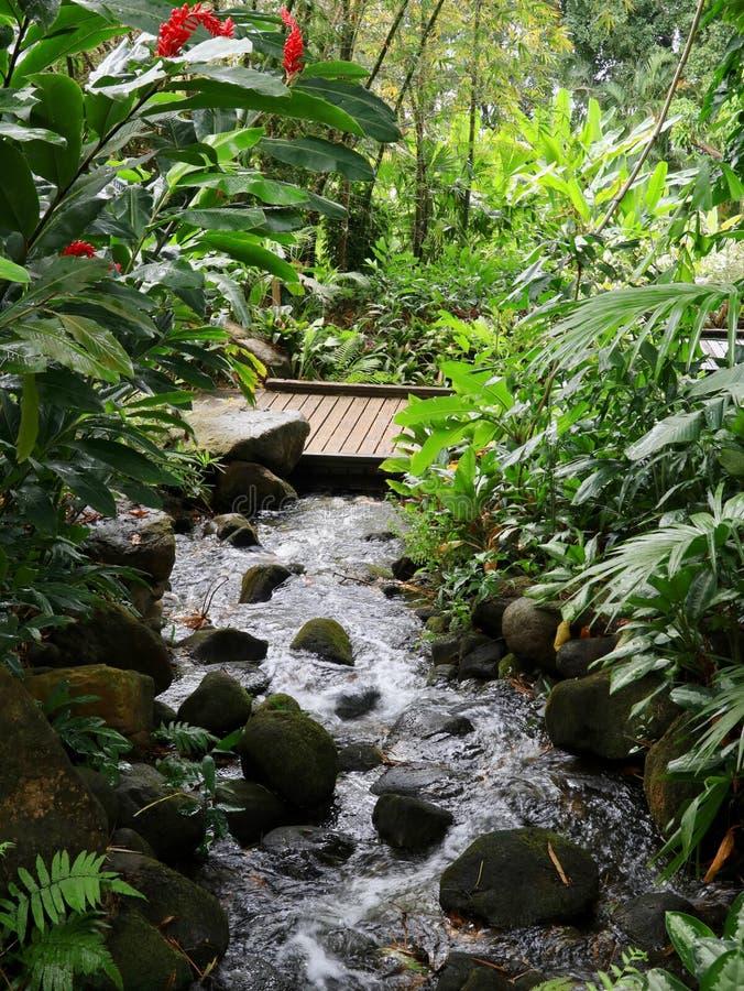 Rocky Stream Through Lush Tropical-Einstellung stockfotos