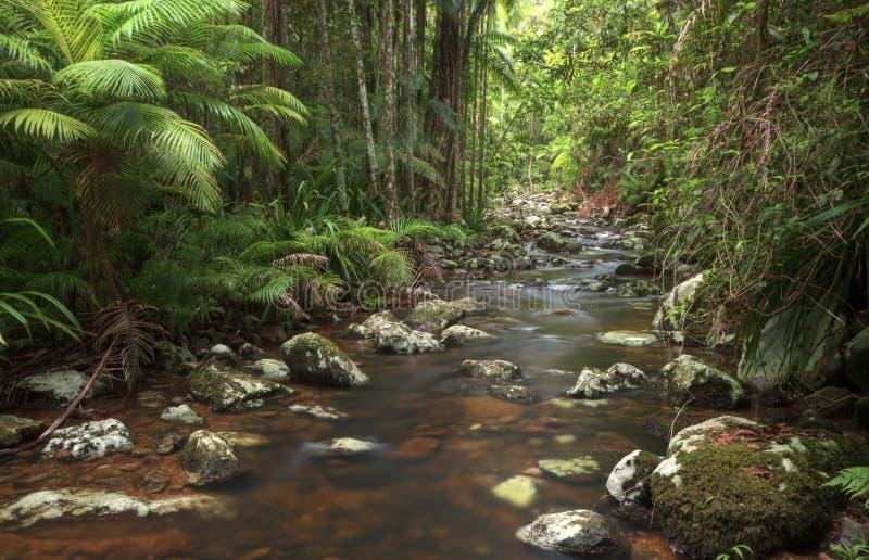 Rocky stream through rainforest and palm trees. Rocky stream through subtropical rainforest and Bangalow Palms, northern NSW, Australia royalty free stock photo