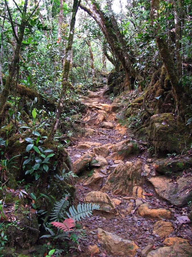 A rocky trail in the midst of a forest jungle stock images