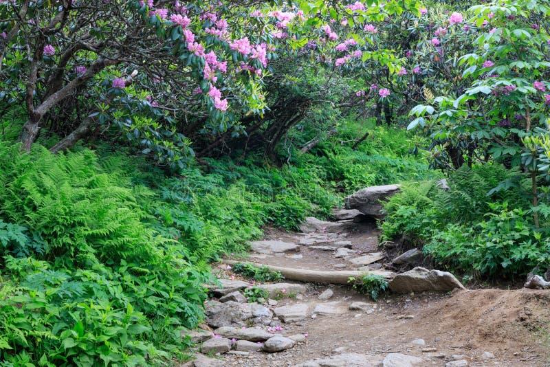 Rocky Trail North Carolina Mountains stock fotografie