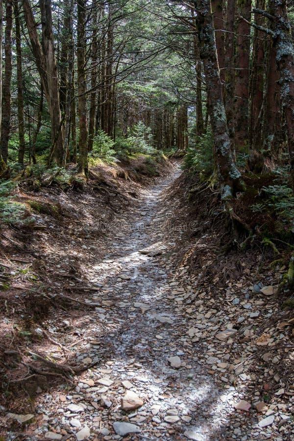 Rocky Trail Passes Through Forest images libres de droits
