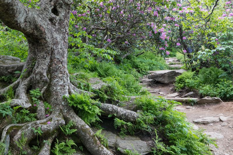 Rocky Trail to Craggy Gardens Asheville North Carolina stock images