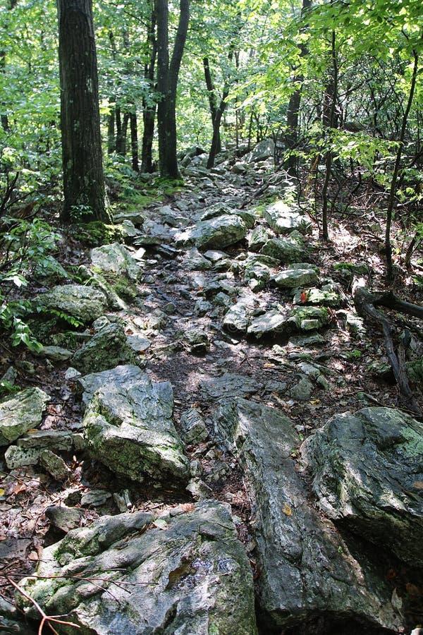 Rocky Trail Through Woods images libres de droits