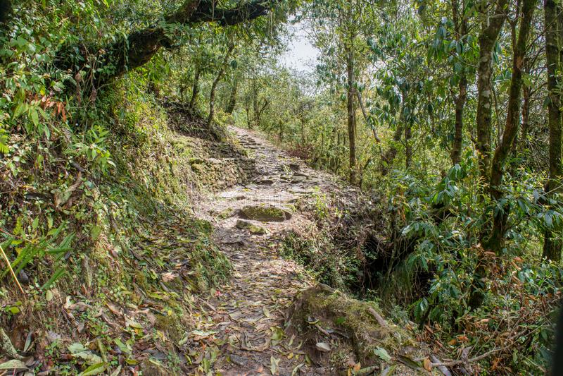 Rocky-Trekking-Weg im Wald auf Mardi Himal-Trekking lizenzfreie stockfotografie