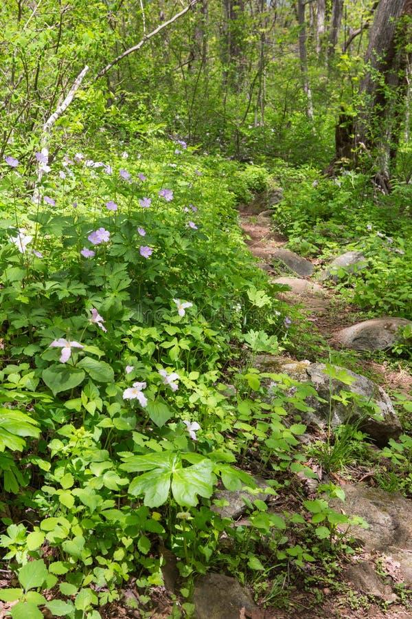 Rocky Trillium Trail Virginia royalty-vrije stock foto