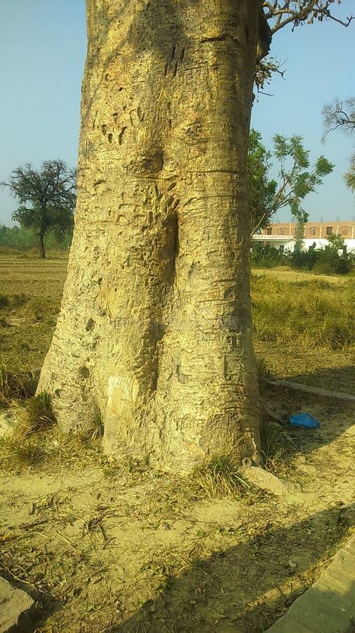 400 roczniaka drzewo obraz stock