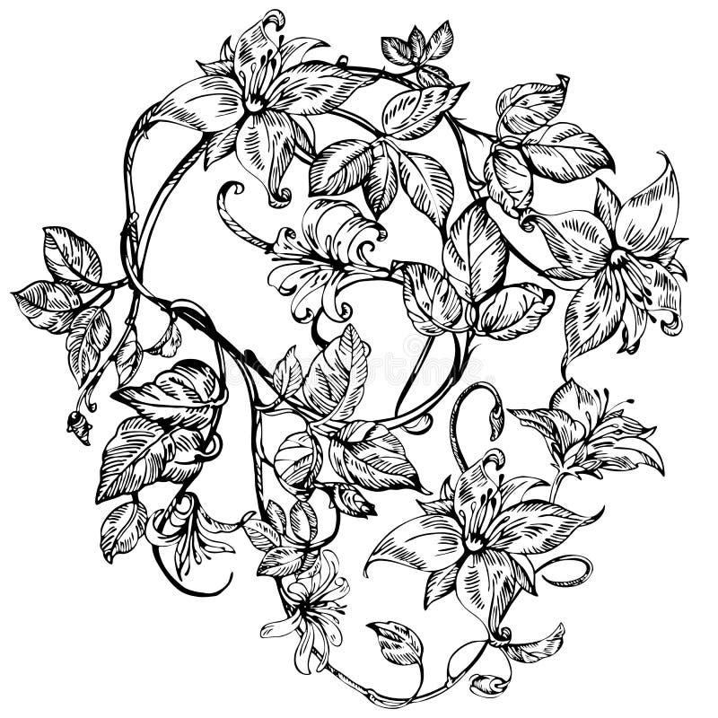 Roczników eleganccy kwiaty Czarny i biały wektorowa ilustracja Banksja kwiat botanika ilustracja wektor