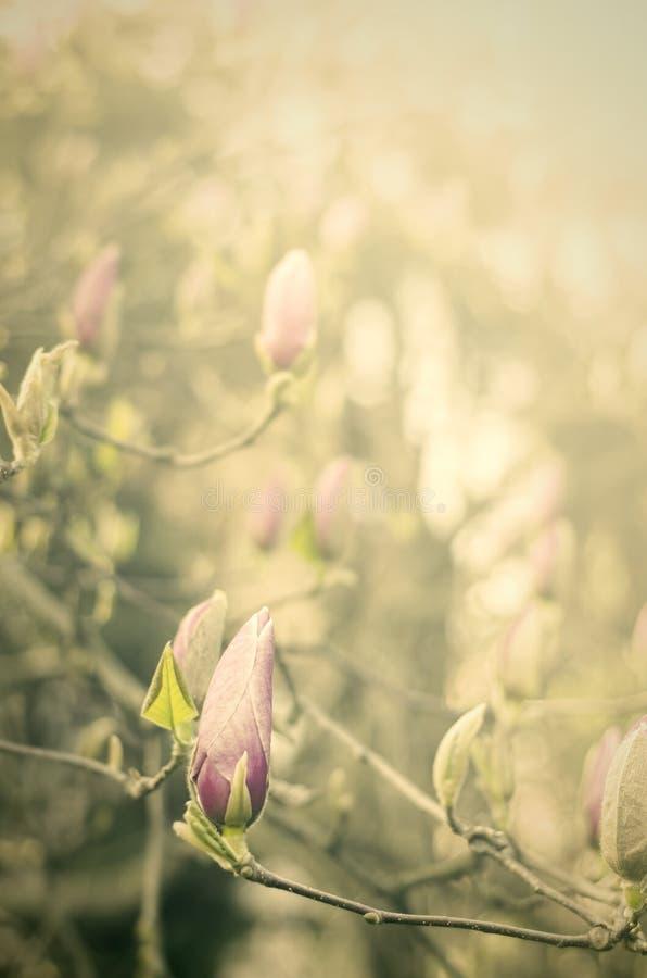 Roczników kwiaty fotografia stock