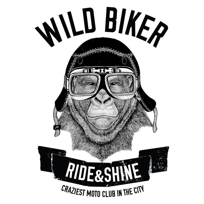 Roczników wizerunki goryl małpa dla koszulka projekta dla motocyklu, rower, motocykl, hulajnoga klub, aero klub royalty ilustracja