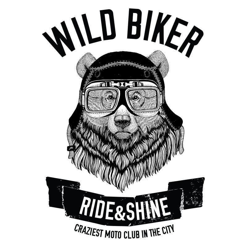 Roczników wizerunki grizzly niedźwiedź dla koszulka projekta dla motocyklu, rower, motocykl, hulajnoga klub, aero klub royalty ilustracja