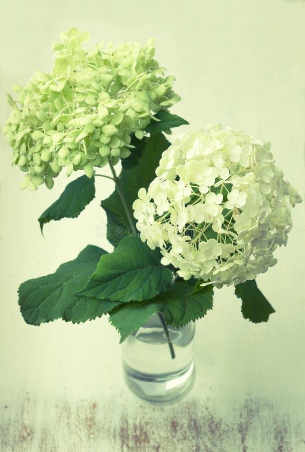 Rocznik biała hortensja kwitnie w wazie fotografia royalty free