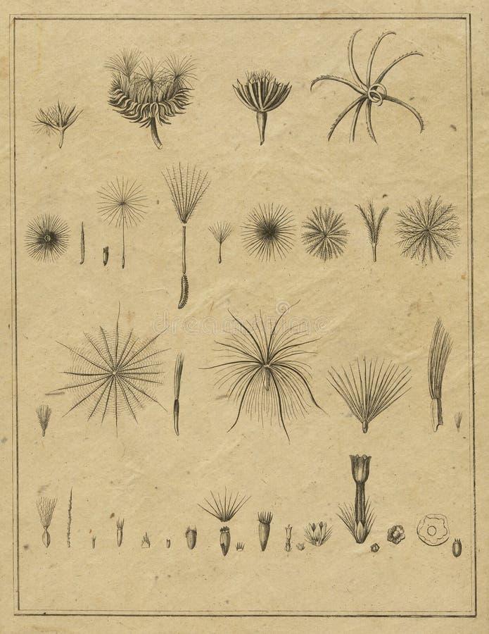 Rocznik botaniki pole Zauważa rocznik Kwieciste ilustracje - Scrapbook Papercrafting - botaniki ilustracja - ilustracja wektor
