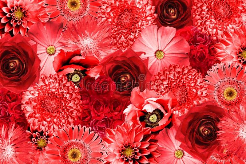 Rocznik czerwień kwitnie kolaż zdjęcia royalty free