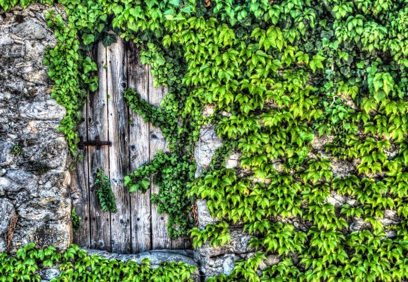 Rocznik drewniana brama z nieociosanym metalem zależy od w starym kamiennej ściany coverd w zielonych winogradach zdjęcia royalty free