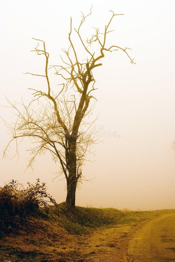 rocznik drzewny obraz royalty free