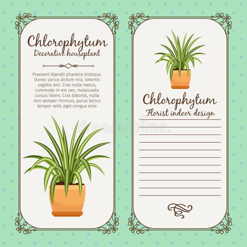 Rocznik etykietka z chlorophytum rośliną royalty ilustracja