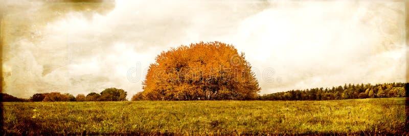 Rocznik filtrował krajobraz, grupa drzewo na polu obraz stock